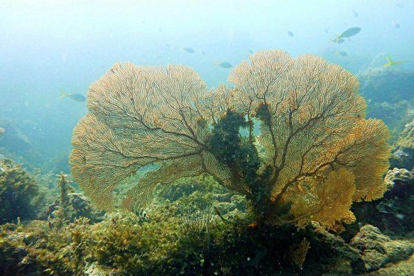 coral dive karimunjawa