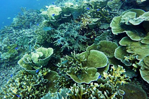 coral diving karimunjawa