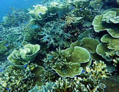 coral karimunjawa snorkeling tour