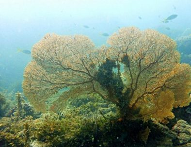 coral snorkeling trip