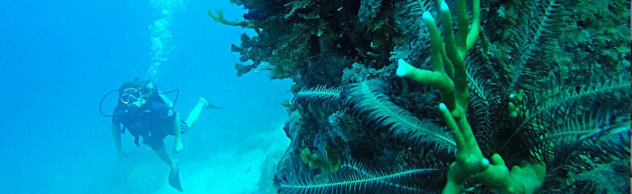 diving islandhopping tour karimunjawa