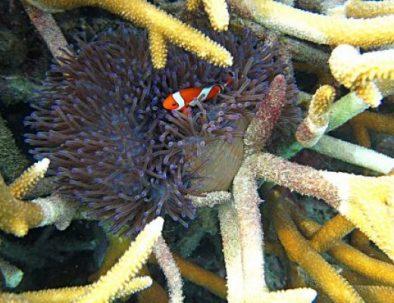 fish coral karimunjawa
