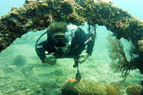 karimunjawa shipwreck