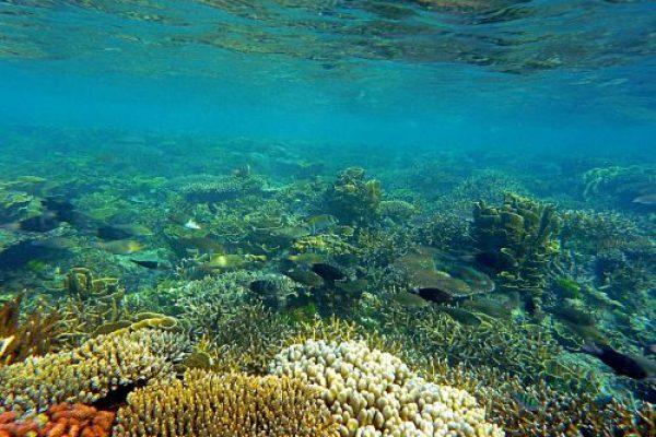 karimunjawa underwaterworld
